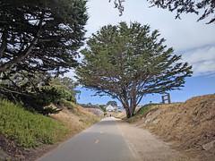 Monterey 6-28-19 (236) (Photo Nut 2011) Tags: monterey california berwickpark pacificgrove