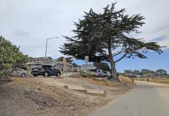Monterey 6-28-19 (205) (Photo Nut 2011) Tags: monterey california andyjacobsenpark pacificgrove