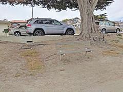 Monterey 6-28-19 (206) (Photo Nut 2011) Tags: monterey california andyjacobsenpark pacificgrove