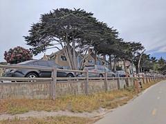 Monterey 6-28-19 (211) (Photo Nut 2011) Tags: monterey california andyjacobsenpark pacificgrove