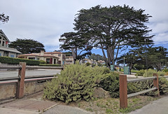 Monterey 6-28-19 (225) (Photo Nut 2011) Tags: monterey california berwickpark pacificgrove