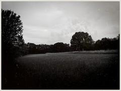 Wiese mit Albrand (shortscale) Tags: schwarzweiss blackandwhite noiretblanc monochrome buw wiese baum