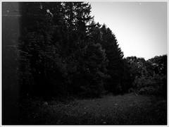 Wald&Wiese (shortscale) Tags: schwarzweiss blackandwhite noiretblanc monochrome buw wald wiese baum
