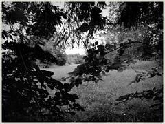 Blick aus dem Wald (shortscale) Tags: schwarzweiss blackandwhite noiretblanc monochrome buw wald wiese