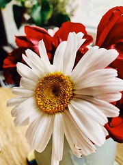 Flowers (unbunt.me) Tags: blumen iphone kodak vsco