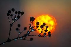 (marussia1205) Tags: солнце вечер капли sun evening drops