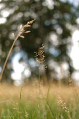 I'm still standing... (nina_nanu) Tags: nature natur forrest focus bokeh wiese