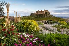 Gertrude Jekyll's Garden II (Chris Lishman) Tags: national nationaltrust lindisfarne holyisland northumberland england garden gertrudejekyll gertrudejekyllsgarden castle landscape