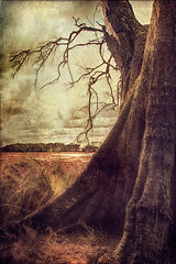 Tree Peeking (Amanda J Richards) Tags: tree trunk texture branches sticks bush forest grass