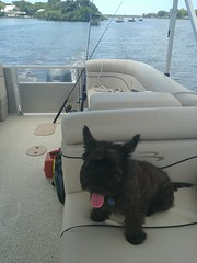 0716191423 (lawatha) Tags: bailey dog 4 legged family cairnterrier cairn terrier