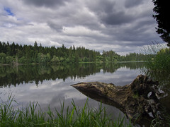 Prinzenteich (michaelmueller410) Tags: lake water grass clouds forest grey see pond woods wasser cloudy himmel wolken grau trunk gras teich wald bäume baum baumstamm grauer