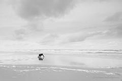 Lost My Contacts (Guillaume Raisonnable) Tags: m10 leica friesland europa schiermonnikoog nederland carlzeiss strand zee 18mm beach distagon distagon418zm leicacamera sea thenetherlands zeissdistagon18mmf4