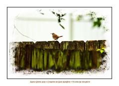 Happy Fence Friday (NancySmith133) Tags: happyfencefriday fences fencefriday fence centralfloridausa