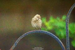 Cutie patooties (NancySmith133) Tags: backyardbirds centralfloridausa coth coth5