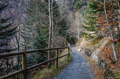 El camino seguro (SantiMB.Photos) Tags: 2blog 2tumblr 2ig artigadelin esbòrdes valldaran valdaran pirineos pyrenees lleida camino way path sendero bosque forest otoño autumn geo:lat=4268017525 geo:lon=070756525 geotagged bordeses cataluna españa