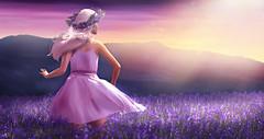 Lavender scent (meriluu17) Tags: foxcity zenith lode lavender field lavenderfield purple plum violet summer scen her dance wind windy pink sun sunset people