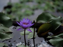 P1091723_LR (enno7898) Tags: panasonic lumix lumixg9 dcg9 xvario 35100mm f28 plants flower