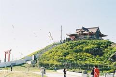 Kabushima Seagull Shrine (しまむー) Tags: minolta α9000 af 50mm f17 kodak gold 200 横浜 菜の花 蕪島神社 列車 train yokohama kabushima