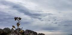 (Celeste Saez) Tags: cielo sky paisaje landscape naturaleza nature