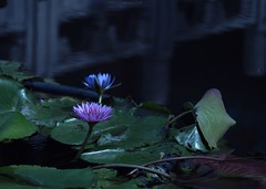 P1091793_LR (enno7898) Tags: panasonic lumix lumixg9 dcg9 xvario 35100mm f28 plants flower