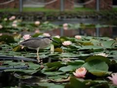 P1091750_LR (enno7898) Tags: panasonic lumix lumixg9 dcg9 xvario 35100mm f28 plants flower bird