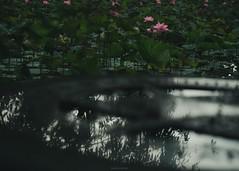 P1091713_LR (enno7898) Tags: panasonic lumix lumixg9 dcg9 xvario 35100mm f28 plants flower