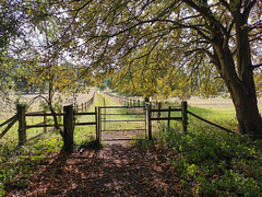 Path up to Ibstone (Bruce Clarke) Tags: path summer buckinghamshire landscape gate outdoor huaweip30 chilterns ibstone trees highwycombe england unitedkingdom