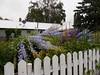 After The Storm (geevee41) Tags: broken flowers delphinium summer prairies