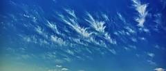 20190511_DP0Q8745-21x9-mod (NAMARA EXPRESS) Tags: color japan spring outdoor fine wide sigma osaka daytime foveon quattro x3 spp dp0 spp661 ultrawide superwide namaraexp blue sky cloud nature landscape toyonaka 21x9 foveonclassicblue