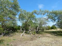 Nationaal Park Zuid-Kennemerland (joeke pieters) Tags: 1470656 panasonicdmcfz150 kennemerduinen nationaalpark zuidkennemerland noordholland nederland netherlands holland nswandeling santpoortnoordoverveen landschap landscape landschaft paysage