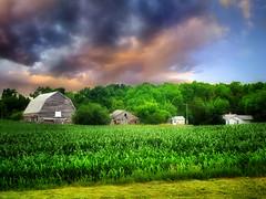 The farm 14 (mrbillt6) Tags: landscape rural prairie farm barn field corn sky scenic summer outdoors country countryside photoart northdakota