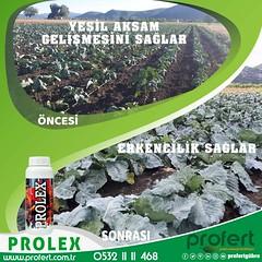 66929501_2349931548555420_5891966235507163136_n (Profert Gübre) Tags: fertilizer fertili sebze sebzecilik seracılık sera sulama seed soil gübre