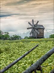 Kizhi island, the windmill ... (miriam ulivi - OFF/ON) Tags: miriamulivi nikond7200 russia carelia lagoonega isoladikizhi kizhiisland allaperto outdoors mulinoaventoinlegno woodenwindmill prato field staccionata fence verde nature sitounesco