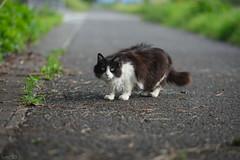 猫 (fumi*23) Tags: ilce7rm3 sony sel85f18 85mm apsccrop a7r3 animal katze cat neko fe85mmf18 chat bokeh ねこ 猫 ソニー