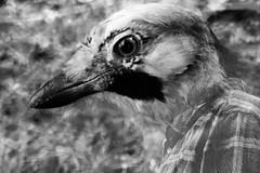 Birdman (tanith.watkins) Tags: humanimal smileonsaturday birdman
