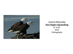 "Two Eagles Squawking • <a style=""font-size:0.8em;"" href=""http://www.flickr.com/photos/124378531@N04/48323864612/"" target=""_blank"">View on Flickr</a>"