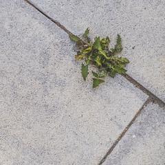 (philippe baumgart) Tags: benfeld alsace elsass street urbain urban minimalism minimal