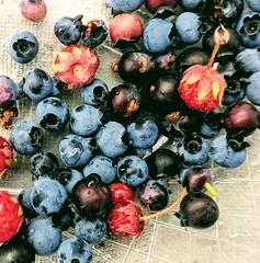 Wild strawberries, wild blueberries (yooperann) Tags: