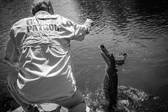 Gator Patrol (michael.mu) Tags: 35mm mm246 monochrom neworleans swamp yellowfilter alligator gator monochrome bw blackandwhite leica