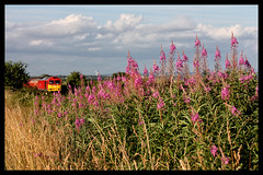 TRACKSIDE COLOUR (OLD GIT WITH A CAMERA) Tags: rosebaywillowherb class60