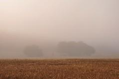 Sommernebel zwischen 6 und 7 Uhr (Uli He - Fotofee) Tags: morgenspaziergang nebel sommer sommernebel morgenstimmung juli ulrike ulrikehe uli ulihe ulrikehergert hergert nikond90 fotofee meinweg weg zuhause nikon
