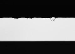 Raindrops (graemes83) Tags: rain drop raindrop water drip black blackandwhite simple minimal minimalism weather raining