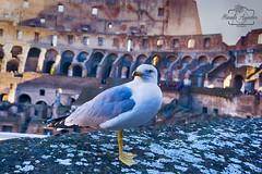 Aequam memento rebus in ardauis servare mentem.  #coliseo #coliseum #anfiteatro #gaviota #romano #ciudad #city #roma #italia #sombras #shadow #turismo #tourism #viajar #travel #paisaje #landscape #photography #photographer #inspired_by_colour #MiFotoDR #s (Manuela Aguadero PHOTOGRAPHY) Tags: anfiteatro mifotodr coliseo sonyα6000 shadow manuelaaguaderophotography romano city sonyalpha sonyimages tourism italia sony6000 sonyalphasclub sombras photographer inspiredbycolour viajar paisaje coliseum roma turismo sonya6000 sonystas ciudad gaviota travel sonyalpha6000 landscape photography