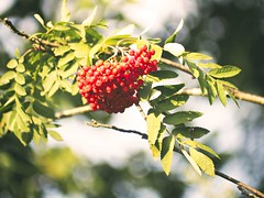 Fruit Nature Bokeh | 19. Juli 2019 | Tarbek -Schleswig-Holstein - Deutschland