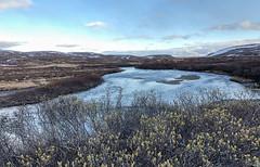 Gednje, Varanger IMG_3061 (grebberg) Tags: gednje varanger finnmark norway june 2019
