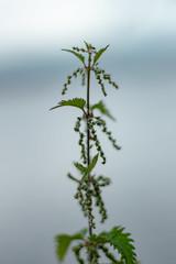 Lochside Plantlife (AlexU99) Tags: macro canon70d nature wildflower floral flower plant plantlife