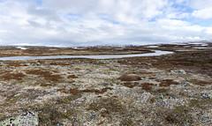Gednje, Varanger IMG_3055 (grebberg) Tags: gednje varanger finnmark norway june 2019