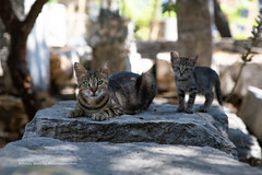 Ancient Agora (ArmanWerthPhotography) Tags: armanwerthphotography cat greece streetcat ancientagora athens kitten