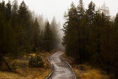Forest Path (Anjmittu) Tags: yellowstone mountain montana wyoming park trees rocks snow