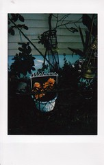 IMG_20190719_0002 (merrybelletrist) Tags: instax7s instaxmini instax instant